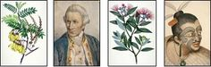 The history and use of New Zealand's native plants Kiwiana, Native Plants, New Zealand, Nativity, Meant To Be, Flora, Trees, History, Painting