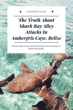 Amergris Caye in Belize is a MUST visit destination. The truth about Shark Ray Alley attacks in Ambergris Caye Belize travel is. Belize Vacations, Belize Travel, Honeymoon Destinations, Central America, South America, Latin America, The Wonderful Country, San Pedro Belize, Ambergris Caye