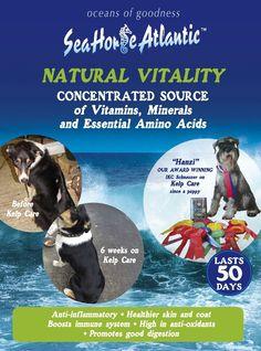 www.seahorseatlantic.ie Sea Weed Recipes, Marine Environment, Boost Immune System, Healthy Skin, Dog Cat, Horses, Puppies, Seaweed