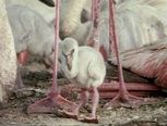 Veilig leren lezen - kern 6  Van ei tot flamingo