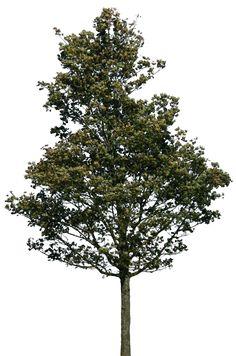 tree 38 png by gd08.deviantart.com on @deviantART