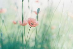 Summer Poppies | Preppy in Poppy http://heyweddinglady.com/preppy-in-poppy-seaside-summer-wedding-inspiration/
