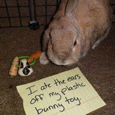 Hot new bunny trend alert!