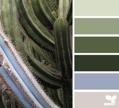 cacti color