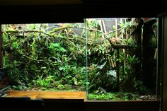 My dream is to have a terrarium this size one day....