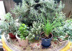 comment conserver les herbes aromatiques en hiver