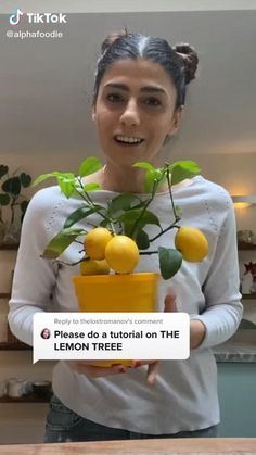 Amazing tutorial by @alphafoodie! Give her a follow ❤️ lemon tree #lemontreeindoors #gardeningtips House Plants Decor, Plant Decor, Garden Plants, Indoor Plants, Growing Vegetables, Growing Plants, Household Plants, Inside Plants, Plant Aesthetic