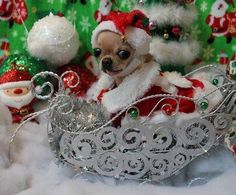 All I want for Christmas is my Cute Sweet Chi ♪♫