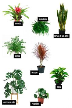 Idea Of Making Plant Pots At Home // Flower Pots From Cement Marbles // Home Decoration Ideas – Top Soop Types Of Flowers, Types Of Plants, Flower Pot Design, Inside Garden, Bedroom Plants, Snake Plant, Little Plants, Interior Design Living Room, Houseplants