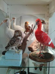 Taxidermy! new mounted birds!