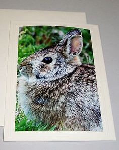 EASTER BUNNY Photo Greeting Card with Bible by KindredSpiritImages