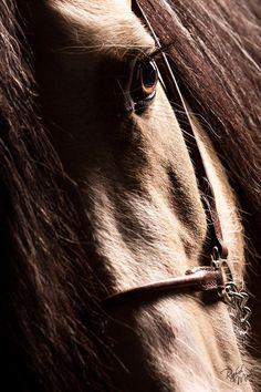 PASSION & HORSES & Es De