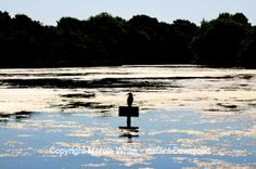 Cormorant on Sign, Chichester Harbour, Colour Photograph by Marcia White £2.49, Download to print and frame.  Fabulous, inexpensive yet beautiful, gift idea.