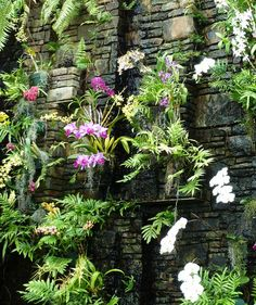 The conservatory contains an impressive orchid collection, some of which are displayed here on a rock wall