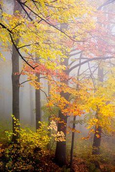 Fall and Fog   David Pinzer