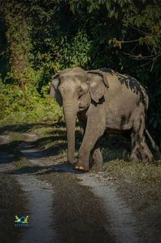 Elephant Ride, West Bengal, Travel Pictures, Safari, Tourism, Mystery, Scenery, Wildlife, Places To Visit