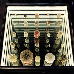 ウニ展ディスプレイ : 2014年7~9月に開催された「ウニ展」のディスプレイです。 Infinity Table, Infinity Mirror, Exhibition Display, Museum Exhibition, Display Design, Booth Design, Museum Displays, Jewellery Display, Installation Art