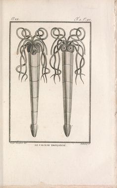 t.2 (1802) - Histoire naturelle, générale et particuliere des mollusques : - Biodiversity Heritage Library