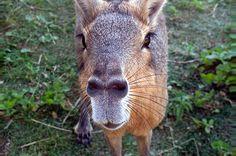 La empresa Zoo de Buenos Aires ganó la subasta por otros cinco años, con la promesa de mejorar el habitat y bienestar de los animales cautivos, aún no pueden apreciarse las mejoras. (Cecilia Profetico). Más fotografías: http://clarincomhd.tumblr.com/tagged/El-D%C3%ADa-en-Fotos