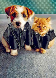 Leather Jacket Animals Friendship Card