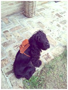 Cuite Dog backpack by HarLex Leather goods