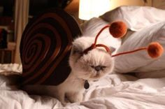 Funny and creative pet costumes, cat costumes, dressed up cats Cute Cats, Funny Cats, Funny Animals, Cute Animals, Funniest Animals, Cats Humor, Cat Fun, Grumpy Cats, Silly Cats