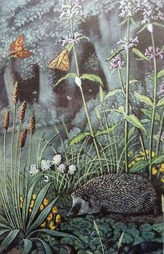 C F Tunnicliffe for Ladybird Books3