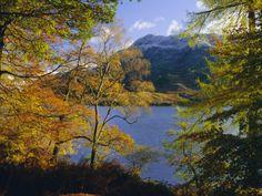Autumn Trees at Ullswater, Lake District National Park, Cumbria, England, UK, Europe