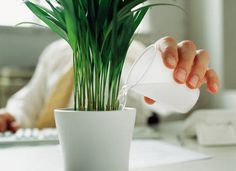 Houseplants ... esp those in this list, are not only great feng shui, but help purify the air, too ... terrific solution for offices or high-rises where you can't open the window to get fresh air