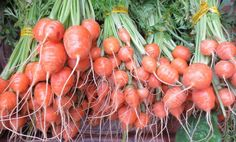 Carrot Seeds ~ PARISIAN ~ Early Round Red-Orange Carrots ~High Yield ~ 50+ Seeds Sweet Carrot, Carrot Seeds, Companion Planting, Container Plants, Parisian, Carrots, Organic, Vegetables, Red