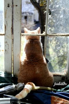 Leo's lookout - cat in old broken window