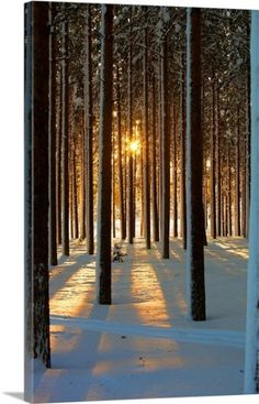 Pine Forest by www.se - Pine Forest Photograph - Pine Forest Fine Art Prints and Posters for Sale Winter Photography, Landscape Photography, Nature Photography, Amazing Photography, Digital Photography, Photography Tips, Beautiful World, Beautiful Places, Beautiful Pictures