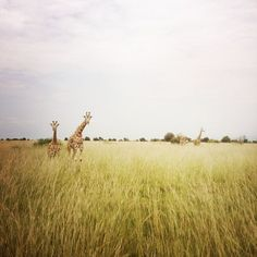 On safari Photo by Kasey Jackson -- National Geographic Your Shot
