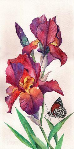 I love Irises.  Resaved from Светлана Чугунова