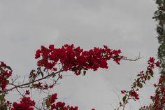 #fotografia #primavera #spring