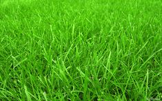 Free Grass Backgrounds   Free Wallpaper - Free Nature wallpaper - Grass Football Pitches ...