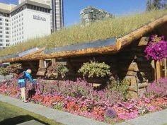 Grass roof on cabin - earth sheltered urban area