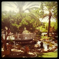 The Turtle Pond at #SDSU. Best place to sit between classes.