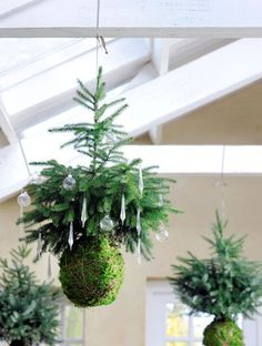 Kokedama Ball Ideas (A Guide How to Make & Plant Care Kokedama Christmas tree via Buitenleven magazine (Dutch).Kokedama Christmas tree via Buitenleven magazine (Dutch). Christmas Garden, Noel Christmas, All Things Christmas, White Christmas, Christmas Crafts, Christmas Decorations, Xmas, Hanging Christmas Tree, Christmas Ornaments