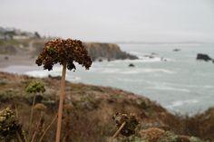 More amazing California coastline