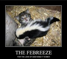 Animals Cute And Funny On Pinterest Funny Animal Skunks