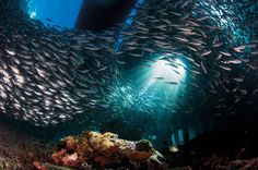 The increasing acidity of our seas is a threat to marine life that for many species may be impossible to overcome.