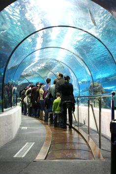 Quiero ver los lugares magníficos. Este es un acuario. Querio ver los animales en Barcelona.