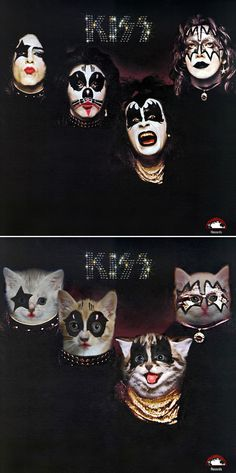 Classic Album Covers Recreated With Kittens