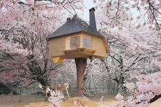 Sonho hj e amanhã.  Podemos morar numa casa de árvore?