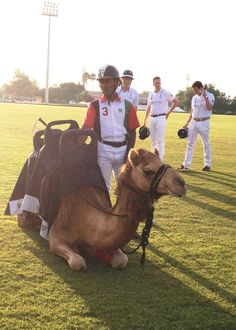 Camel Polo at British Polo Day Abu Dhabi 2013