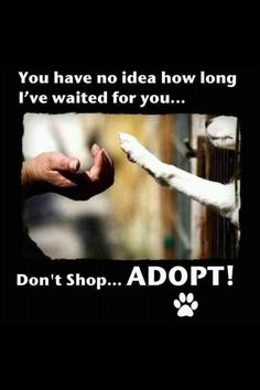 don't shop, ADOPT! Please remember this when getting a pet as a gift this holiday season.
