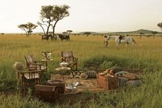 Safari Style.