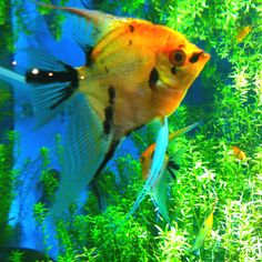 ♥ Pet Fish Stuff ♥ Tropical fish for the aquarium.