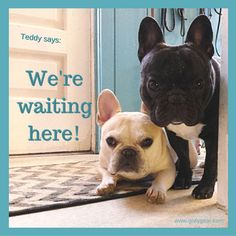 Teddy says: We're waiting here, the philosophy of a 5 year old French Bulldog